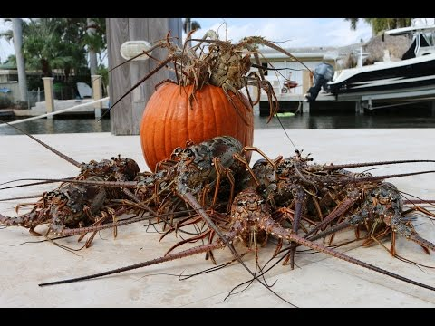 Florida Lobster Ceviche Recipe- Halloween Lobster Crawl!!!
