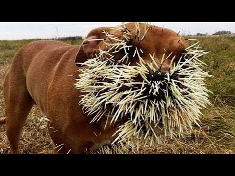 Live: The Best Attacks Of Wild Animals 2017 - Craziest Anima