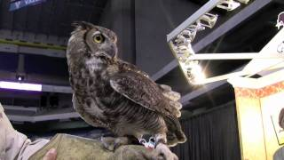Birds of Prey Demonstrations by Last Chance forever