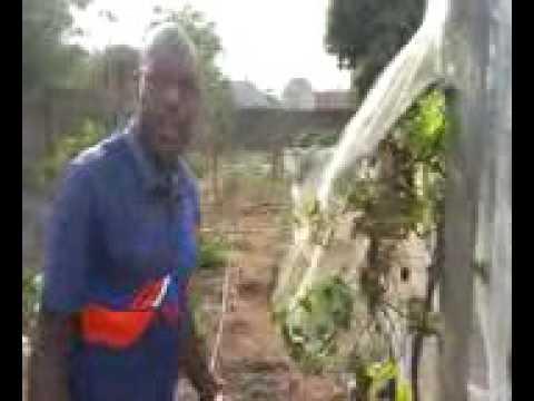 Demystifying Grapes Farming in Nigeria
