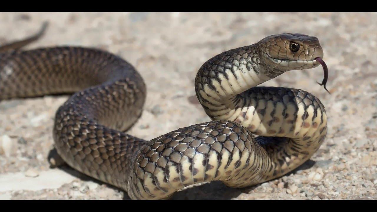 Rüyada kara siyah renkli yılan görmek ne demektir