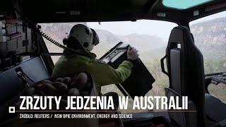 Dokarmianie zwierząt na spalonych terenach z helikoptera w Australii