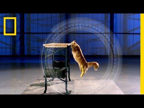 Cats vs. Gravity | Science of Stupid