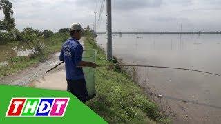 Cận cảnh câu ếch đồng mùa nước nổi | THDT