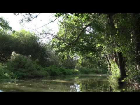 The Wey   & Arun Canal