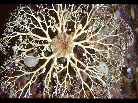 Facts: The Basket Star