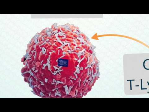 Immune to Cancer | Michael Jensen | TEDxStMarksSchool