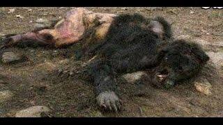 狼男がブラジルで捕獲されていた!? 狼男症候群 検索動画 6