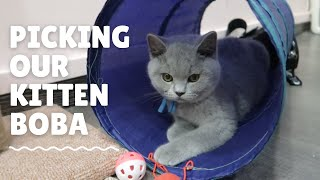 Picking our British Shorthair Kitten (Boba) from Chubby Buddy Cattery