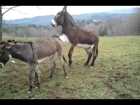 Boy Donkey Fail