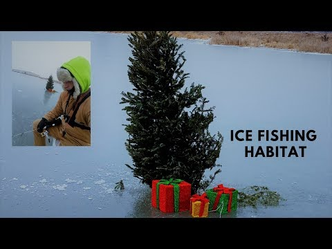 Ice Fishing Habitat (with A Christmas Tree)