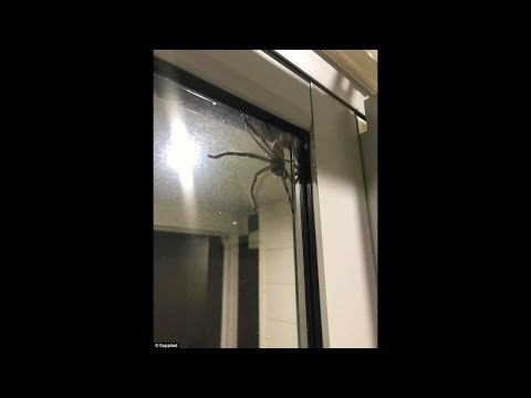 niño atacado por una araña gigante, termina mal..
