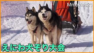 """北海道恵庭市にある""""えこりん村""""で、 毎年開催されている、「えにわ犬ぞ..."""