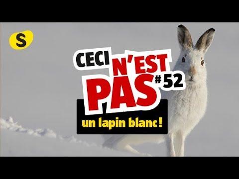 Ceci Nest Pas Un Lapin >> Ceci N Est Pas Un Lapin Blanc 52 Youtube
