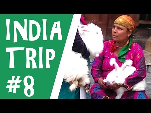 INDIA TRAVEL Series 08 World's highest post office, yak, Rohtang Pass, Manali mushrooms