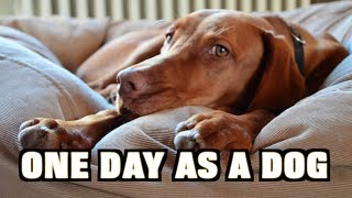 One Day As A Dog