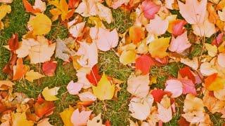 2시간 연속 듣기 | 뉴에이지의 계절 | 가을날 듣기 좋은 피아노곡 | 뉴에이지 연주곡