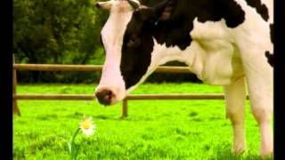 Polish milk commercial with a cow that has hay fever and flower....