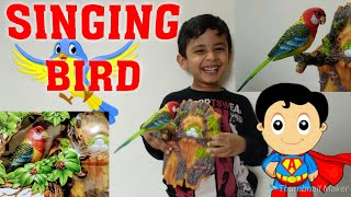 Beautiful singing bird parrot, unboxing and review by a sweet little kid.