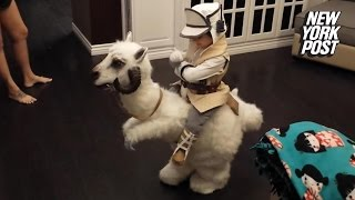 Star Wars fans will drool over this kid's DIY Halloween costume