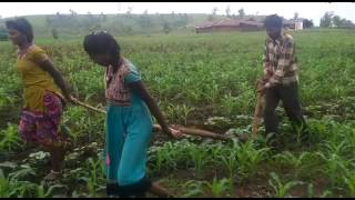 Teenage girls, not oxen, plough farmland in Madhya Pradesh due to money shortage