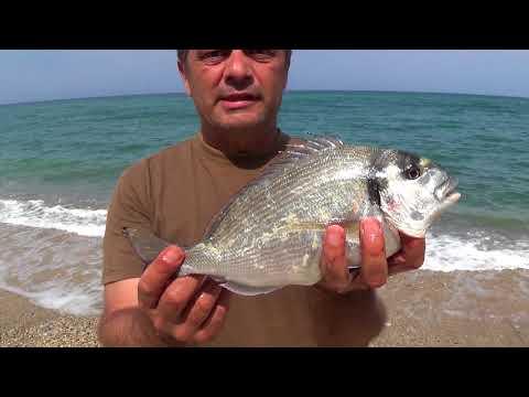 Рыбалка Дорады
