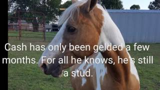 Tami Marler's herd boss defends mare from new recently-gelded stallion