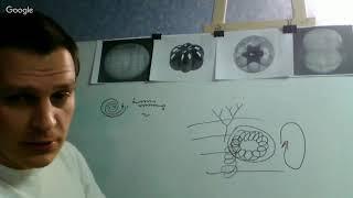 Лечебный прибор катушка Мишина, самостоятельное изготовление, лечение рака, сердца и др.