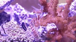 Mode Aquariums Drop-OFF Peninsula Aquarium