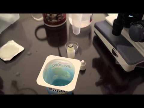 Yogurt under a Microscope [40x 100x 400x 800x 2000x] Bacteria SEEN!