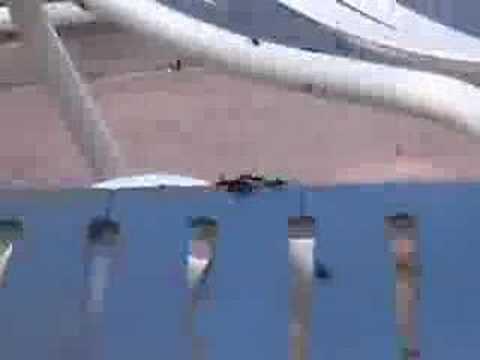 Love Bugs at Walt Disney World Resort