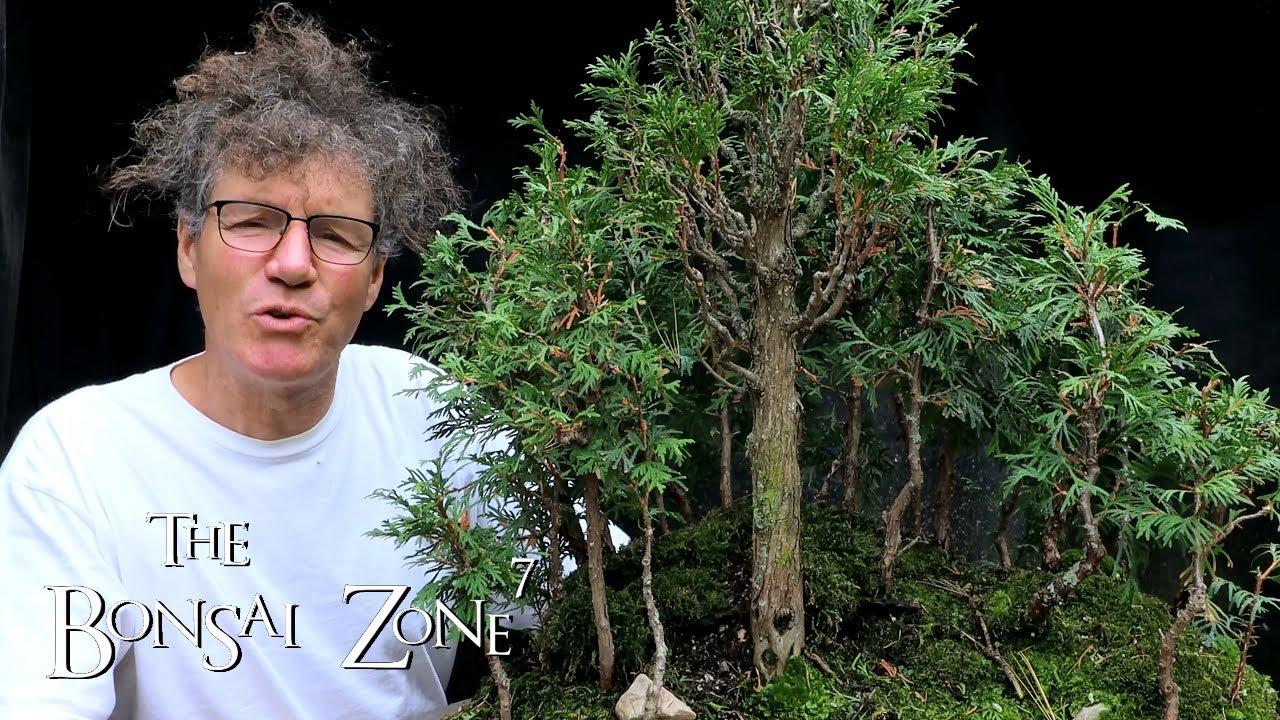 My Bonsai Avatar Grove Part 3 The Bonsai Zone Sept 2020 Youtube