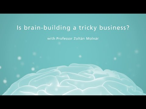 Is brain-building a tricky business?