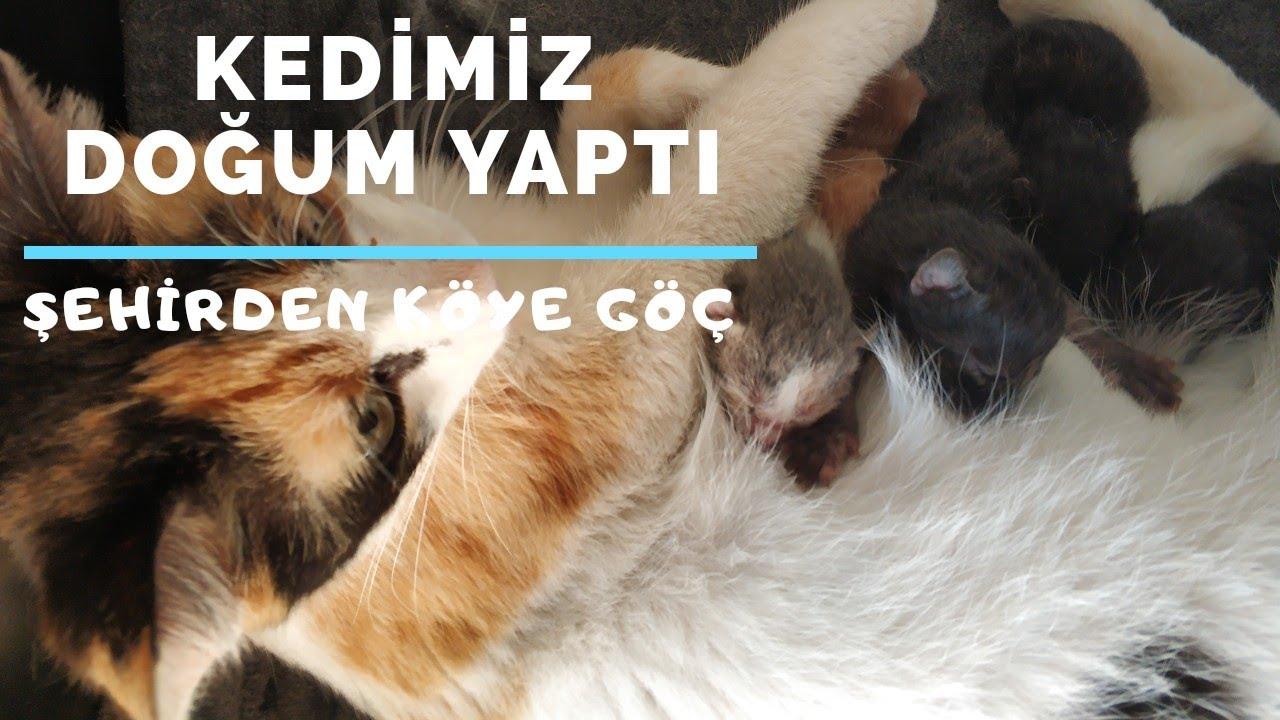Kedimiz Doğurdu | Kedinin Doğum Anı | Hayvanlar Alemi | Köyde Yaşam | Şehirden Köye Göç | 68.Bölüm