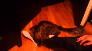Кот пристает к ноге
