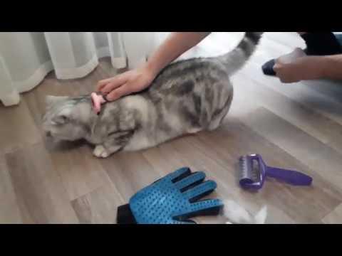 Чем вычесывать шерсть кошке?