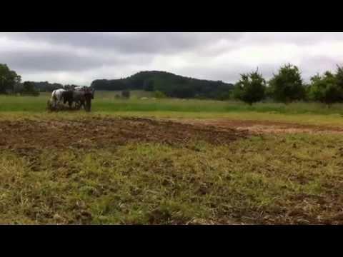 Maraichage biologique en traction animale Les Jardins d'Upaline Lot et Garonne