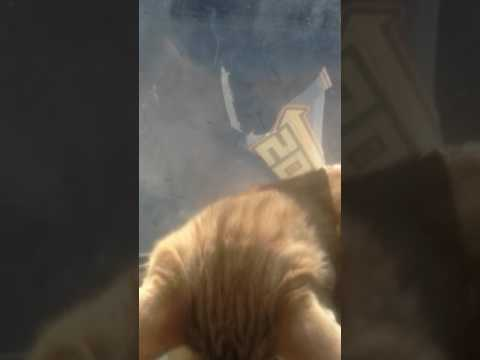 Simba nephew help me no its called pay back!(with a cat)#sophia
