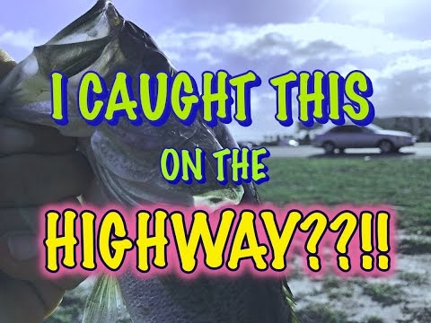 Bass Fishing From The Highway !?!? How To Fish Retention Ponds