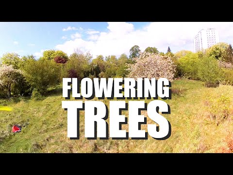 Фото FPV-DIRK:????????FLOWERING TREES ???????? ENJOY THE SPRING ???????? (EPIC, CINEMATIC) (1440/60p)