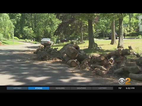 Long Island's Smithtown Turning Into 'Stumptown,' Due To Companies Dumping Trees Into The Street