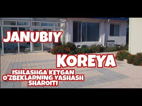 KOREYADAGI O'ZBEKLARNING YASHASH SHAROITI QANDAY?