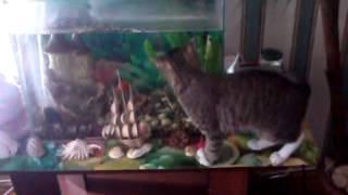 кошка и аквариум))