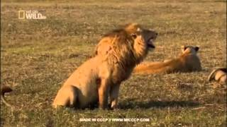 Клипы животных