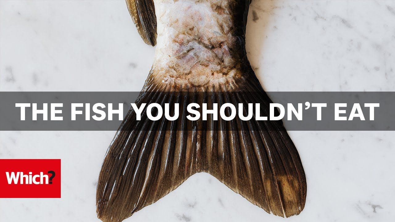 What Fish is Sustainable? | Which? Investigates