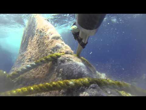 Humpback whale disentangled off Maui