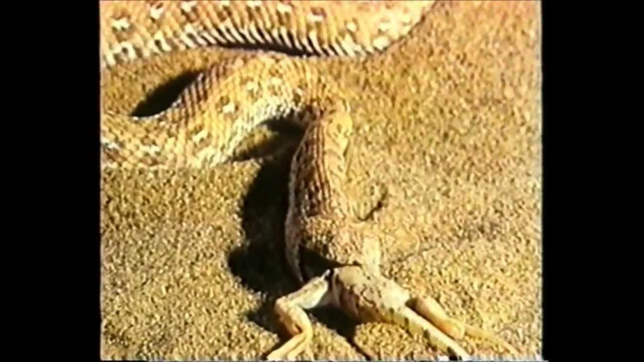 O Lado Positivo Da Vida: Namibe: O Deserto Da Namíbia
