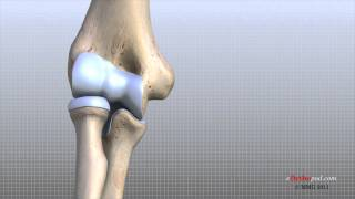 Elbow Anatomy Animated Tutorial