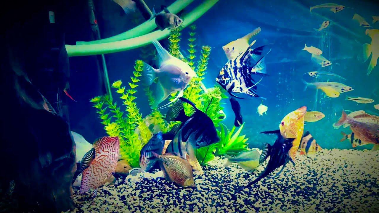 Fish tank 50
