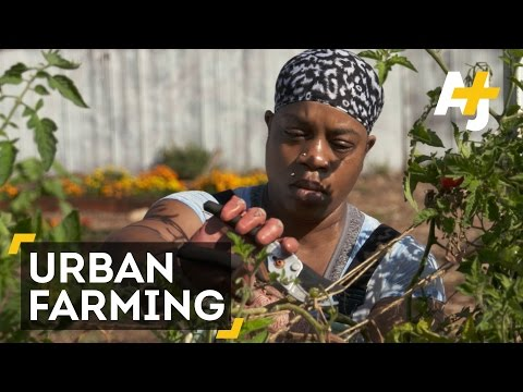 Black Panther-Inspired Urban Farming